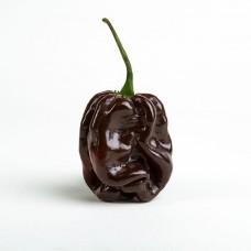Chocolate Habanero Seeds