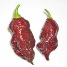 Bhut Jolokia Chocolate Seeds