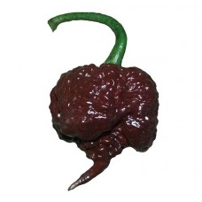 Carolina Reaper Chocolate Chilli Seeds