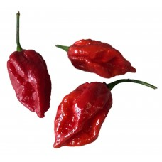 Naga Viper Chilli Seeds